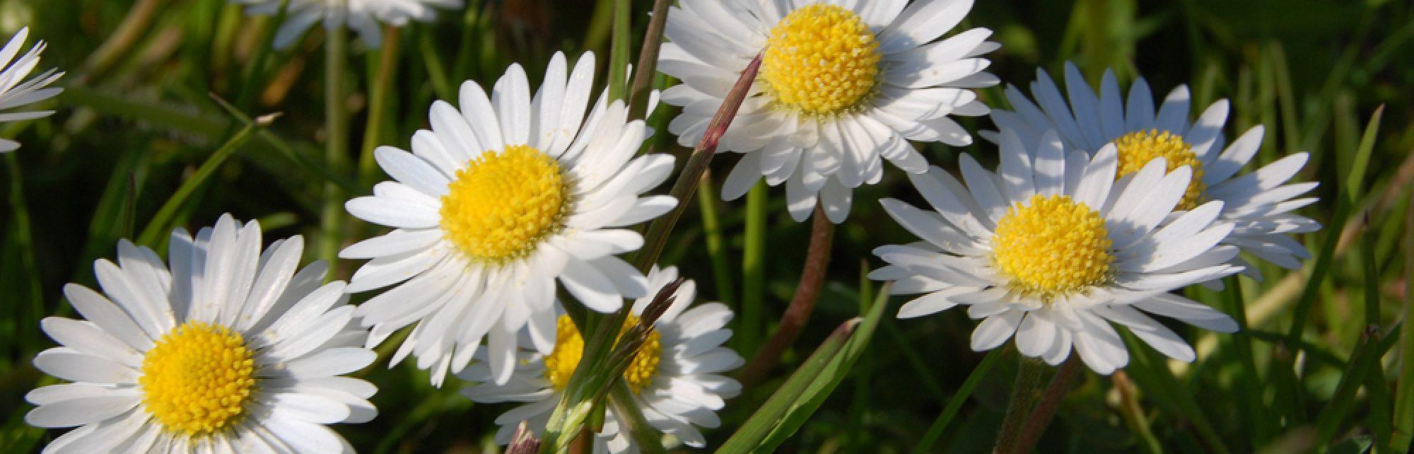 Fleurs qui chantent